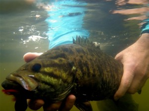 Smallmouth Virginia 4