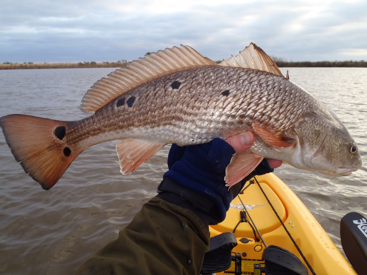 I cast in a yak by aaron rubel about adventures in kayak for How to fish for redfish
