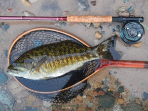 The beauty of smallmouth bass and the habitat they reside in.